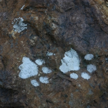 animal-footprints